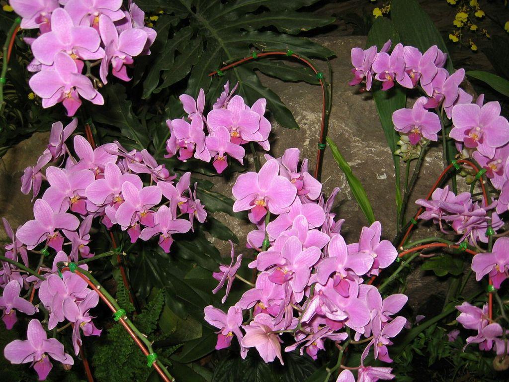 Produkte pflanzen blumen angie 1090 wien for Pflanzen blumen