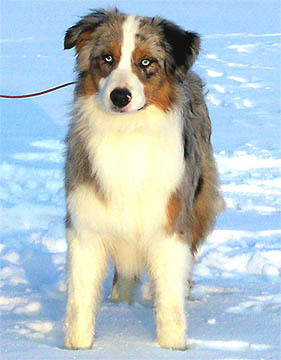 Hund Fleetfootmc of Western Recall Fossy
